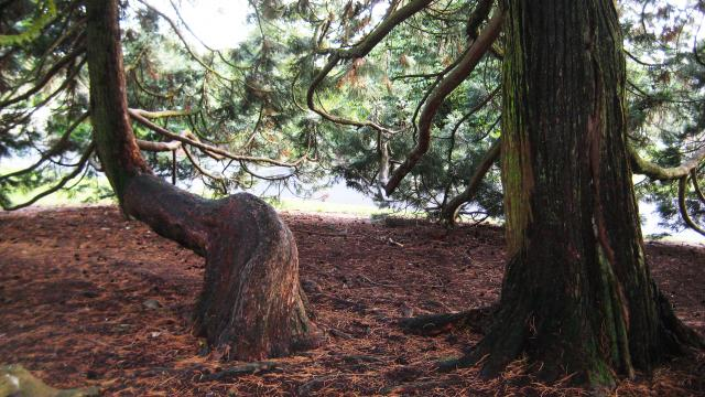 arboretum-bagnoles-orne