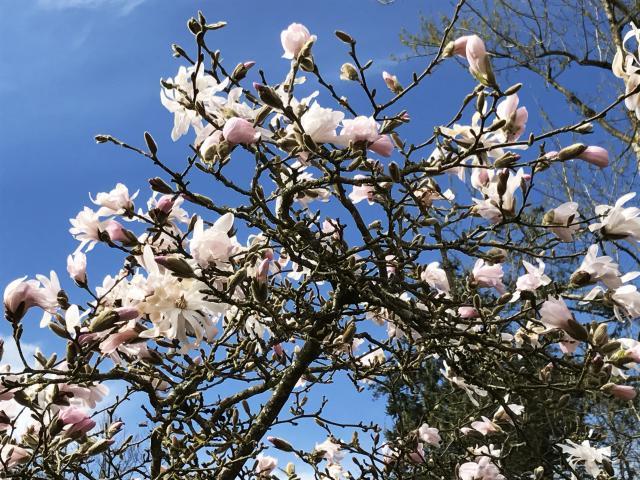 fleurs-arboretum-bagnoles-orne3