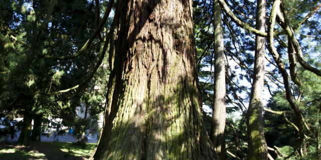 foret-arbre-bagnoles-orne