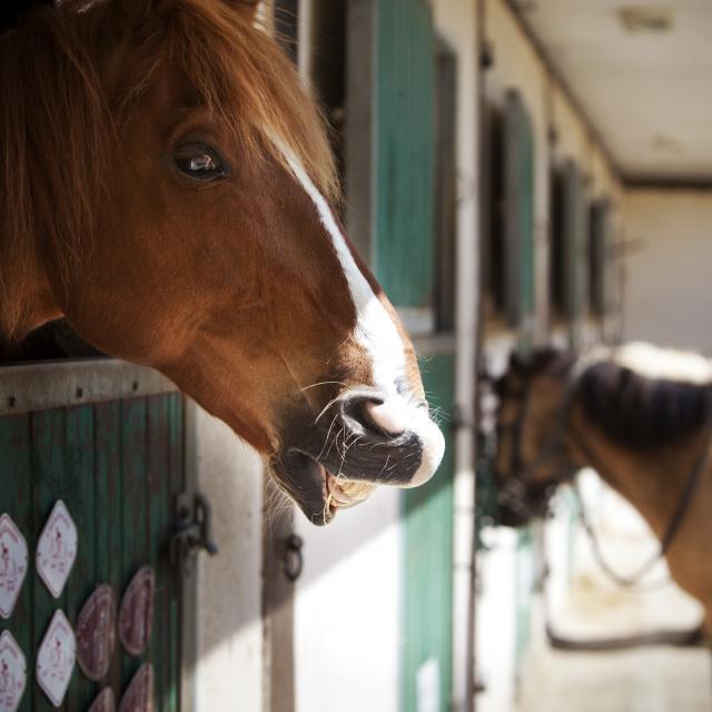 bagnoles-orne-seminaire-incentive-cheval-management-3