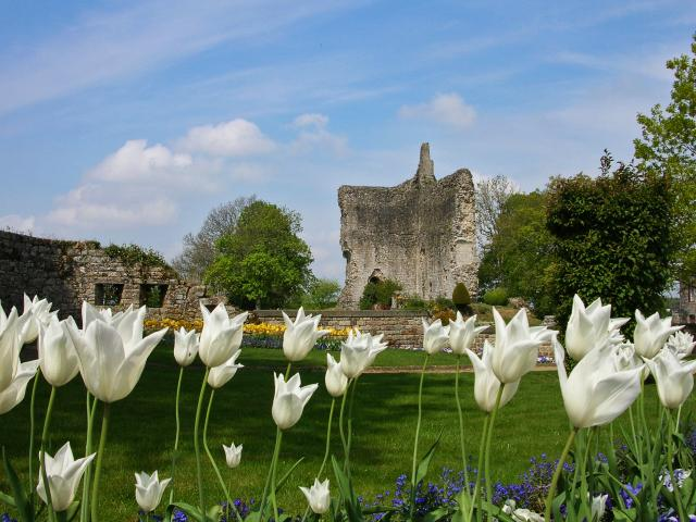 Domfront Chateau Cite Medievale Fortification Vestige Ruines Tulipes