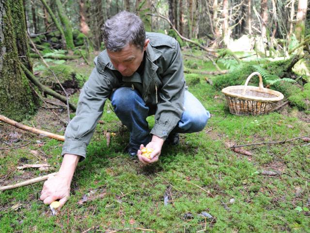 Picking of mushrooms 1