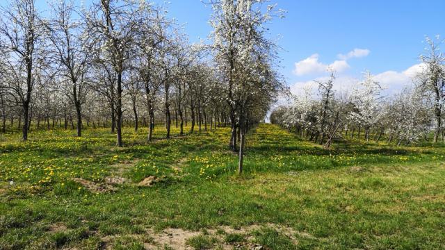 Bagnoles Orne Martellieres Ferme Calvados Terroir Savoir Faire Visite Cidre Pomme Champ Verger Campagne